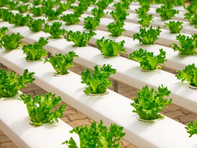 What Are Hydroponics?
